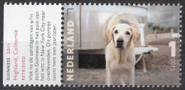 Nederland - Charlotte Dumas - Guineness, 2011 - Golden Retrriever - MNH - NVPH 3331 - Honden