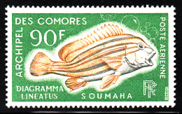 Comoro Islands MNH Scott #C24 90fr Diagramma Lineatus - Fish - Comores (1975-...)