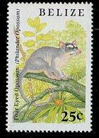 (cl. 3 - P13) Belize ** N° 904 (ref. Michel Au Dos) - Opossum  - - Belize (1973-...)