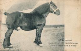 "BELGIQUE - TIELT - VIVE SAINT BAVON - SINT BAAFS VIJVE - "" PIOT DE CORROY "" ( Cheval - Horse ) - Tielt"