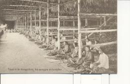 Nederlands Indië - Indonesia - Sumatra  - 1915 - Indonésie