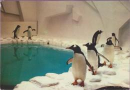 Oiseau °° Manchot Spectaculaire De L'Antarctique Parc De Villars-les-Dombes °° NEUVE °coin H D Bradée - Vogels