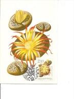 Fleurs - Lithops Weberi ( CM De Hongrie De 1965 à Voir) - Végétaux