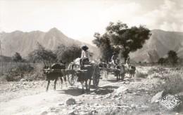 Mexique - Attelage Asteco - Mexico - Mexique