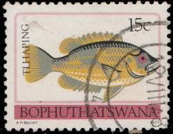 Bophuthatswna 1977. ~ YT 11 - Poisson - Afrique Du Sud (1961-...)