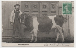 56 MORBIHAN - PONTIVY Vente De Vache Bretonnes, Boeufs D'herbages - Pontivy