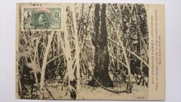 COTE D'IVOIRE Vitime Des Feticheurs PENDU Par Les Pieds Au Milieu Des PALETUVIERS Grand Lahou 1903 - Ivory Coast