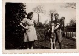 Photo Originale Animaux - Cheval - Chevaux - Couple Et Un Jeune Poulain - - Anonyme Personen