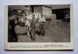 80  - MAILLY-MAILLET - Dans Une Ferme Les Poilus Teignent Les Chevaux Blancs En Noir - Autres Communes