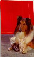 CHIEN / 10 CARTES POSTALES  / LOT  1395 / 40 - Postales