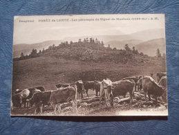 Forêt De Lente  Les Pâturages Du Signal De Montuez - Vaches - Ed. Mollaret - L233 - Non Classificati