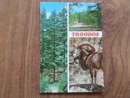 50225 POSTCARD: CYPRUS: TROODOS: Cedar Trees In Cedar Valley / Mouflon (Agrinon) / Cedar Valley. - Cyprus