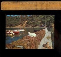 TOULON Var 83 : Port Méjean Ou La Paix Au Port Chat Chien Cat & Dog - Toulon