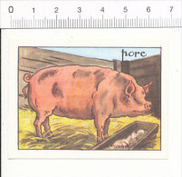 Image Editions éducatives TBE  Calvet-Rogniat / Porc / Cochon / Animal Pig Agriculture Elevage  / IM 175/7 - Chromos