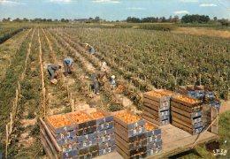 B18682 La Cueillette Des Tomates - Sin Clasificación