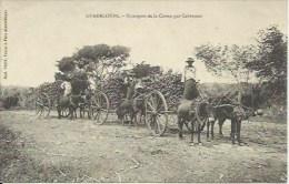 LA GUADELOUPE   Transport De La Canne Par Cabrouets - Guadeloupe