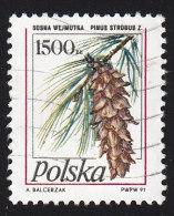 POLAND - Scott #3014 Pinus Strobus (*) / Used Stamp - Alberi