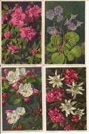 Lot De 8 Cartes Postales  - Photo Gyger & Klopfenstein   -   FLEURS - Non Classés