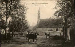 29 - PLOMELIN - VACHE - France