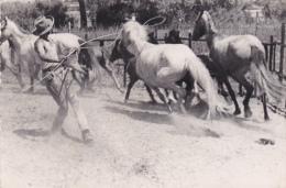 CPSM - PHOTO Dentelée (30) AIGUES-MORTES Dressage De Chevaux Horse Carte-Photo - Aigues-Mortes