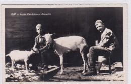 Chèvres / Ziegen / Goats. Armaillis Et Chèvres Dans Les Alpes Vaudoises - Animaux & Faune