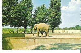 Parc Zoologique Granby, Quebec  Zoological Park Elephant D'Asie  Indian Elephant - Andere