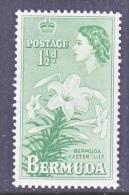 BERMUDA  145   *  EASTER  LILY  FLOWER - Bermuda