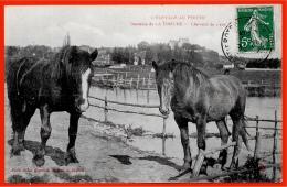 CPA 28 Domaine De LA TOUCHE Le PERCHE Pittoresque Chevaux (Percherons) De 2 Ans * Jules Renoult * Cheval Percheron - Nogent Le Rotrou