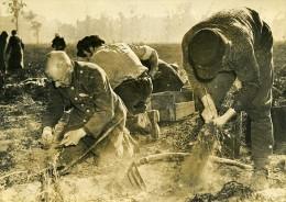 Allemagne Berlin Aprés Guerre Ramassage Pommes De Terre Au Tiergarten Ancienne Photo 1947 - Plaatsen