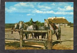 CHEVAUX CAMARGUAIS - Pferde