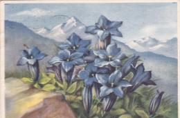 Italy 1949 Used Postcard Milano Postmark Villegiate A Cavallese - Entero Postal