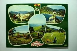 D 88 - Souvenir Des Vosges - Folklore - Zonder Classificatie
