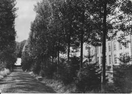 (D14 - 315-316 - )  Home De La Ste Famille Ochain-Clavier L'Allée Des Peupliers - Clavier
