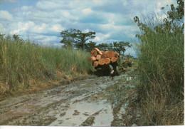 CP - PHOTO - IMAGES DU GABON - LA SAISON DES PLUIES - A 78 - J. TROLEZ - Gabón