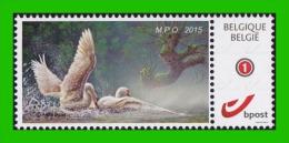BUZIN - Cygne** MPO (Malines) 12-12-2015 - 1985-.. Birds (Buzin)