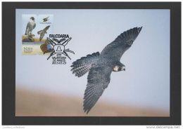 MAXIMUM POSTCARD PORTUGAL WILD LIFE FALCON BIRD BIRDS FALCO PERIGRINUS NATURE OISEAUX - Portugal