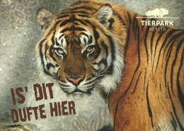 TIGER * BOVINI * BISON * BUFFALO * ANIMAL * ZOO * Tierpark Berlin 02 02 * Germany - Tigres