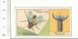 Do You Know ? The Common House-fly - Foot Of Fly / Mouche Entomologie / IM 39/2-Wills - Wills