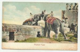 ELEPHANT FIGHT N.V.F.P. PRIMI 900 - Non Classés