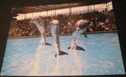 United Kingdom England Bottled Nose Dolphins Windsor Safari Park L6 SP.5611 DRG J Arthur Dixon - Used - Windsor