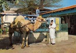 LA MARSA (Tunesien) - Cafe Du Saf-Saf, Gel.1965, Sondermarke - Tunesien