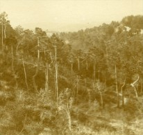 France Vacances En Cote D'Azur Foret Ancienne Photo Amateur Stereoscope Pourtoy 1900 - Stereoscopic