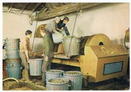 Vendanges : Le Travail Au Pressoir - Vignes