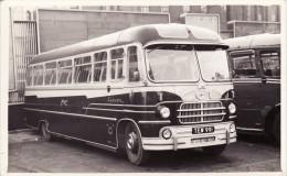 Bus Photo Whippet Coaches Bedford SB1 Yeates Europa TEW991 Hilton - Cars