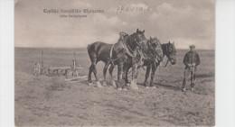 AGRICULTURE TYPIQUE FRANCAISE / HERSE TIREE PAR TROIS CHEVAUX (avec TAMPON ARMEE ALLEMANDE) - Cultures