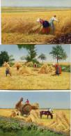AGRICULTURE(LOT DE 8 CARTES) - Agriculture