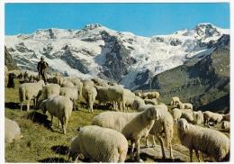 PASTORE - PECORE - GREGGE AI PIEDI DEL MONTE ROSA - VALLE D'AOSTA - 1991 - Unclassified