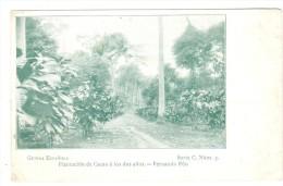 POSTAL    GUINEA ESPAÑOLA  - ÁFRICA  - PLANTACIÓN DE CACAO A LOS DOS AÑOS-FERNANDO PÓO - Guinea