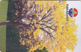 Paraguay, PAR-A-16, 10 Units, Lapacho, National Tree, 2 Scans. - Paraguay