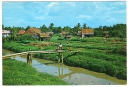 SINGAPORE-VEGETABLE FARM - Singapore